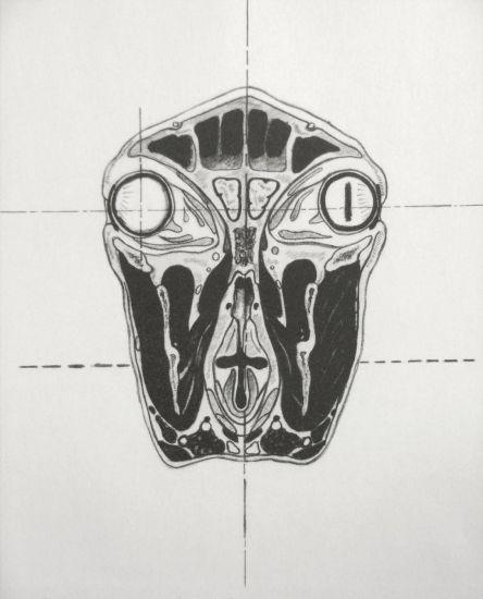 oveja Litografía