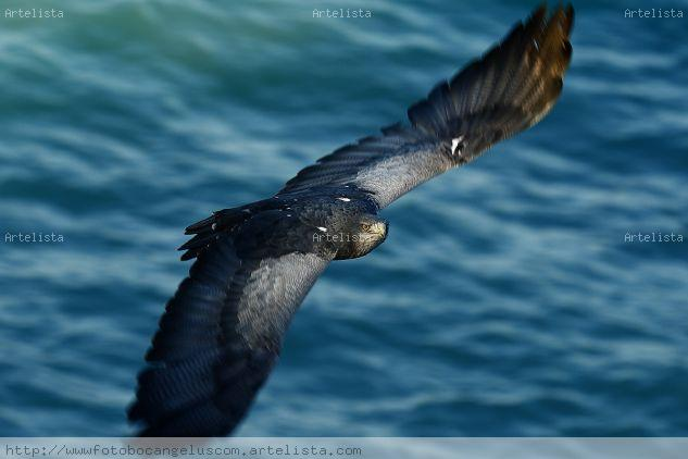 Pose de águila Color (Digital) Naturaleza