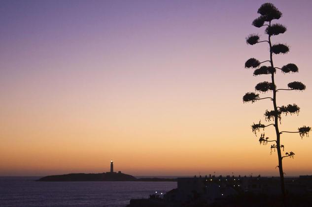 puesta de sol Naturaleza Blanco y Negro (Digital)