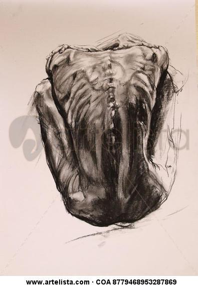 Anatomia Carboncillo