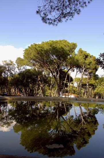 reflefos en el estanque
