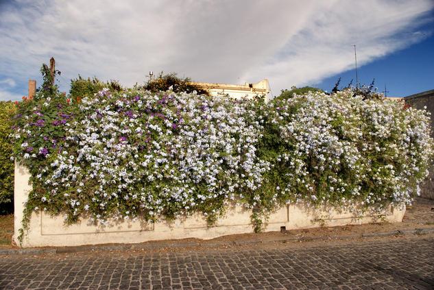 Muro florido Color (Digital) Naturaleza