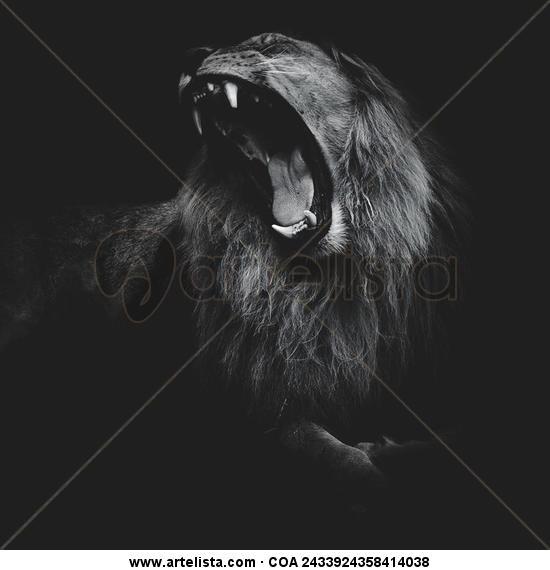 El rey leon Blanco y Negro (Digital) Naturaleza