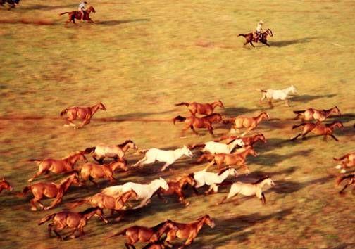 Horses Color (Química) Viajes