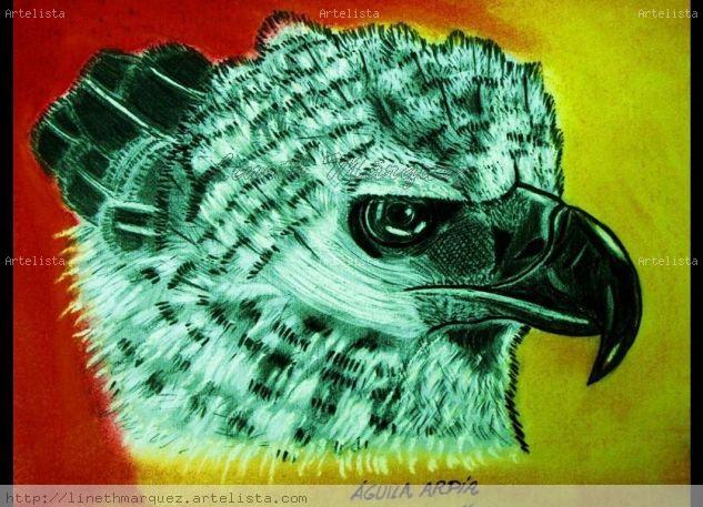 Aguila Arpía de Panamá Sanguine