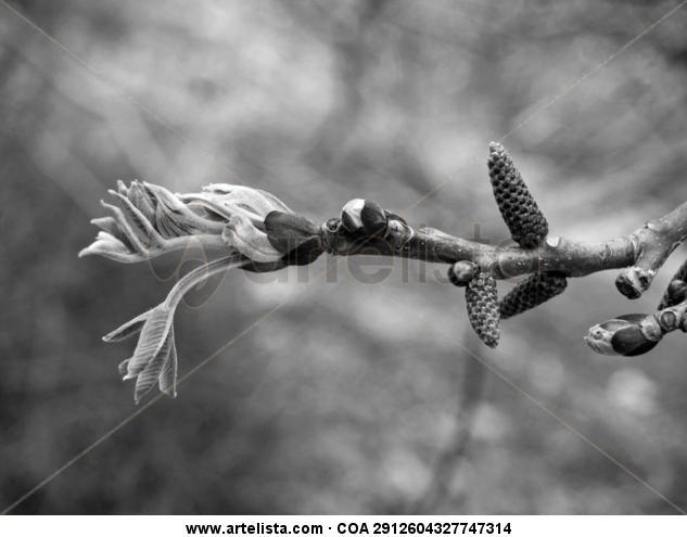 Brotes Blanco y Negro (Digital) Naturaleza