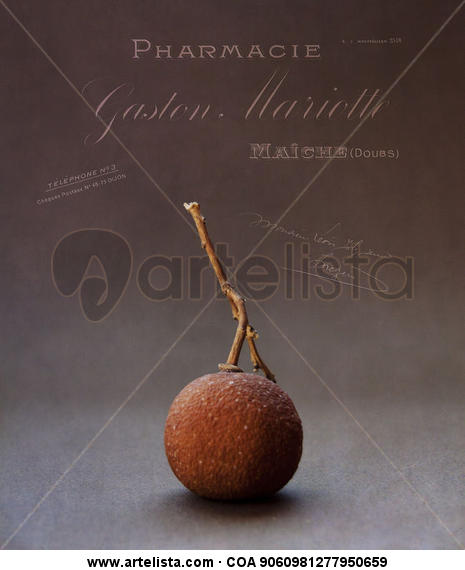 La naranjita seca y los textos franceses. Color (Digital) Bodegones