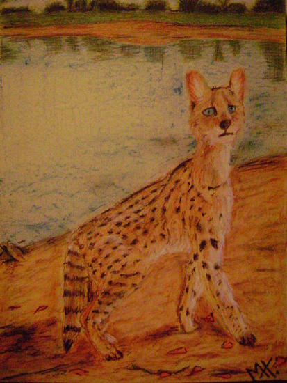 Felino Cartulina Pastel Animales