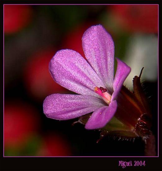Lost heart Color (Digital) Naturaleza