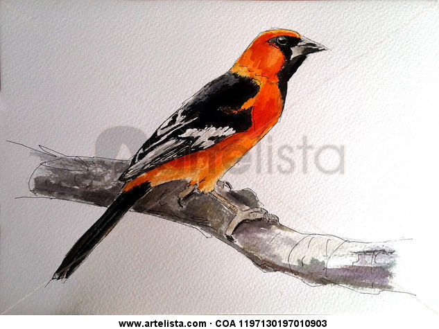 pájaro naranja Paper Watercolour Animals