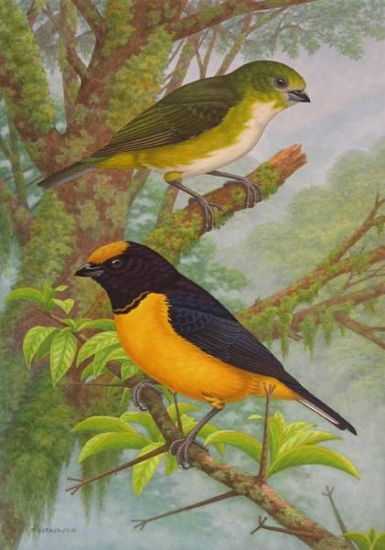 Aves de los Yungas
