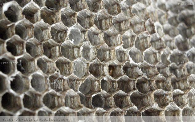 panal abeja Arquitectura e interiorismo Blanco y Negro (Digital)