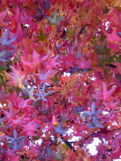 Plaza de otoño 1