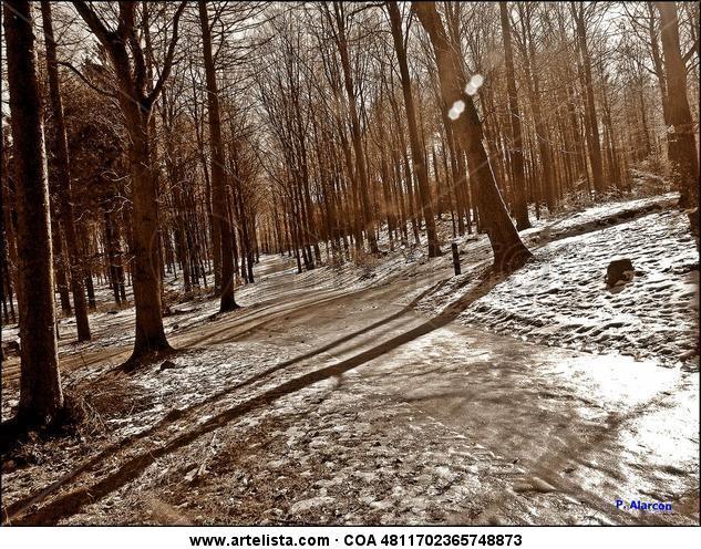 Bosque Nordico Blanco y Negro (Digital) Naturaleza