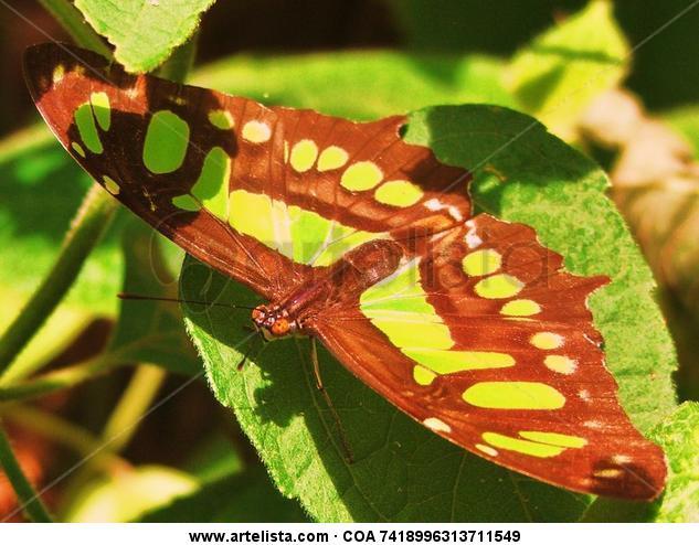 mariposa. Naturaleza Color (Digital)