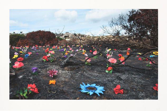 Sin título, Serie ASHES - Carolina Santos Color (Digital) Naturaleza