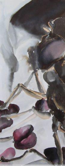 Diptera #12 Papel Tinta Animales