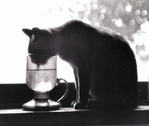 Mi Gata Neomi-My Pet  Neomi Arquitectura e interiorismo Blanco y Negro (Química)