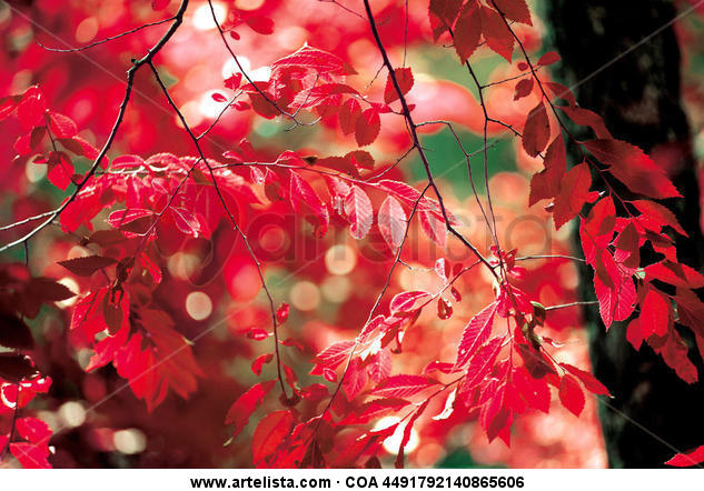NATURE COLLECTION nº 550010 Color (Digital) Naturaleza