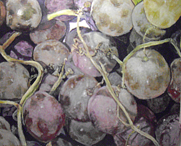 uvas sin lavar Bodegones Óleo Tabla