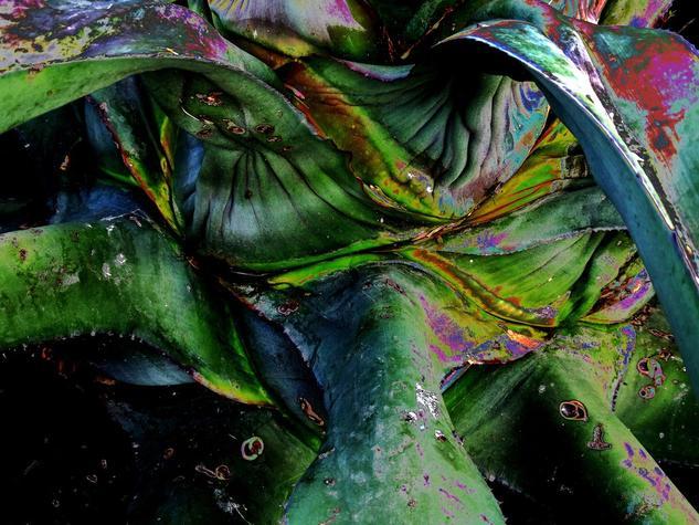 MAGUEY  Conceptual/Abstracto Color (Digital)