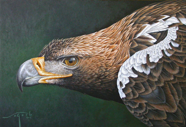 Águila imperial Animales Acrílico Tabla