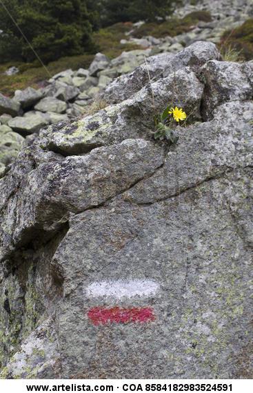 signo del camino Color (Digital) Naturaleza