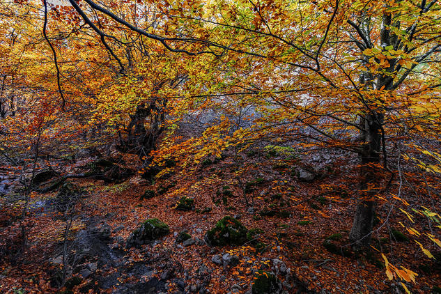 Spanish colors Naturaleza Color (Digital)
