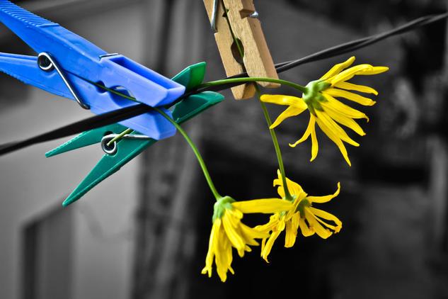 Pinzamiento Color (Digital) Still lifes