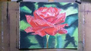 rosa perlada