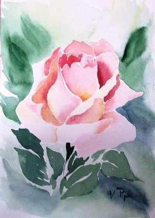 rosa en macro