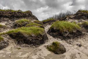 Dunas melenudas / Hairy dunes.