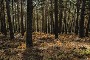 bosque de montaña