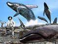 Las ballenas de Raimondi en Sacaco (encuentro con la ballena Roque) I