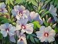 Hibiscus azules