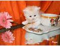 El gatito de la taza