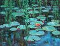NENÚFARES 1-Pensando en Monet.