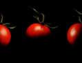 ENRICO PITTON - tres alegre tomate
