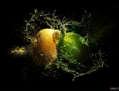 ENRICO PITTON - Lemon Crash