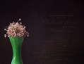 Allium y los textos franceses.