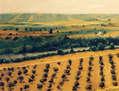campo de Linares (Jaen)