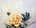 Rosa/Rose.