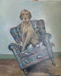 perro en sofa