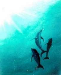 3 delfines