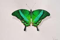 papillon n° 2.
