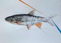 pez con líneas
