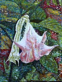 datura,    stechapfel im herbst