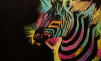 colours of africa- zebra