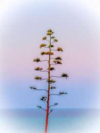 fm-14-12.001 - árbol de navidad psicodelisurrealista / arbre de noël psychédélisurréaliste