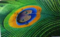 pavo real art